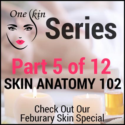 Skin Anatomy 102 – One Skin Part 5 of 12